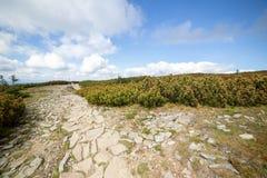 在Beskid山的供徒步旅行的小道在波兰 免版税库存图片