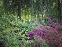 在Bethmann公园的春天开花 库存照片