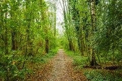 在beusebos的森林道路荷兰 免版税库存图片