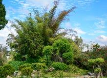 在Bich Cau的绿色树在大叻,越南停放 图库摄影