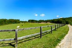 在Bilovice附近的马农场 图库摄影