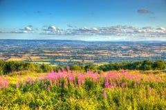 在Blackdown小山的方向的Quantock小山萨默塞特英国英国视图与桃红色的开花HDR 库存照片