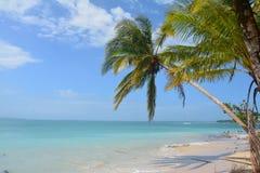 在Bocas del托罗巴拿马的Zapatilla Caye 免版税图库摄影