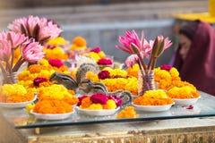 在Bodhigaya,比哈尔省,印度的灰鼠 免版税库存照片