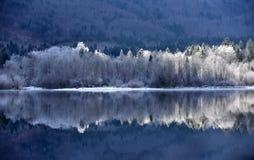 在Bohinj湖的反射 免版税库存照片