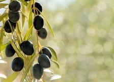 在bokeh背景的橄榄 图库摄影