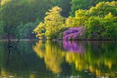 在Bolam湖的初夏 库存图片