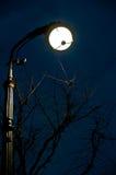 在Bolshaya Konushennaya st和树安置的夜视图灯笼在圣彼德堡,俄罗斯 免版税图库摄影