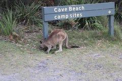 在Booderee国家公园的洞海滩 库存图片