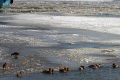 在Borcea的胳膊的鸟 免版税图库摄影