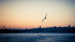 在Bosphorus的日落和一只海鸥在与伊斯坦布尔都市风景的焦点 库存图片