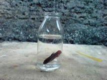 在botle 2的beta鱼 免版税图库摄影