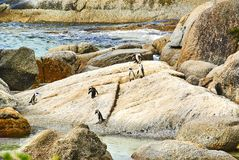 在boulder& x27的企鹅; s海滩有海边的开普敦南非 免版税库存照片