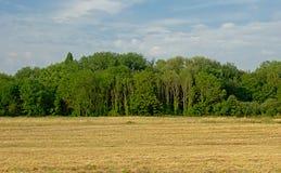 在Bourgoyen自然保护的夏天风景在跟特,富兰德 库存照片