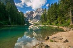 在Braies Lake Lago di Braies的美妙的夏天风景和与反射的落叶松属树在水中 Fanes Sennes布拉伊埃斯Fanes-S 免版税库存图片