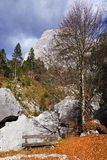 在Brenta白云岩的长木凳在一美好的秋天天 图库摄影
