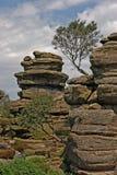 在Brimham的岩石 免版税库存图片