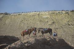在Bromo腾格尔塞梅鲁火山国家公园,东爪哇省,印度尼西亚附近的马骑术服务 库存照片
