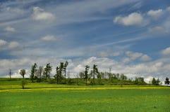 在Bruntal附近的春天 免版税库存照片