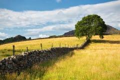 在Bryn Rhyg农场的树 免版税库存图片