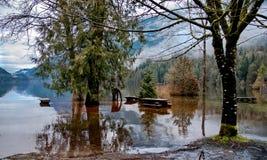 在Buntzen湖的春天洪水 免版税库存照片
