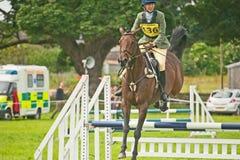 在Burgie的国际马试算 免版税库存照片