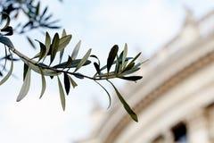 在Burgtheater的橄榄色的枝杈 库存图片