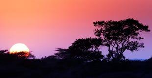 在bushveld的日出 免版税图库摄影
