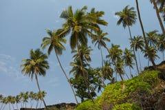 在Cabo de Rama Beach,果阿的棕榈 免版税库存照片