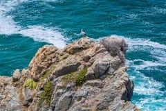 在Cabo Sardao,肋前缘Vicentina,葡萄牙附近的风景海景 图库摄影