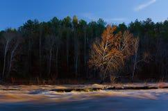 在Cahaba河的秋天树 免版税库存照片