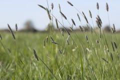 在Calshot附近的芦苇领域 免版税库存照片
