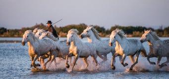 在Camargue马的车手通过沼泽疾驰 免版税库存照片
