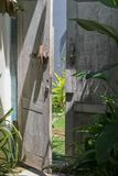 在Canggu入与一栋别墅的绿色热带植物的一个门 免版税图库摄影