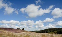在Cannock追逐的欧石南丛生的荒野 图库摄影