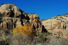 在Canyonlands,犹他附近的秋天 免版税图库摄影