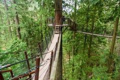 在Capilano吊桥公园的一个树上面走道 免版税图库摄影