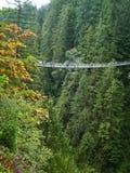 在Capilano谷森林的吊桥在有许多的温哥华加拿大人 免版税图库摄影