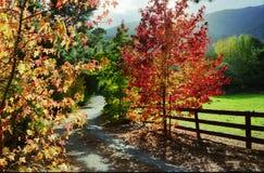 在Carmel谷的秋天 免版税库存照片
