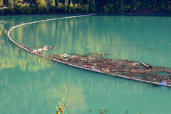 在Carpenter湖的日志景气在不列颠哥伦比亚省,加拿大01 免版税图库摄影
