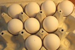 在cartong的鸡蛋 免版税图库摄影