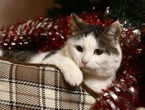 在catbad坏的猫与圣诞节闪亮金属片装饰物 图库摄影
