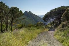 在Cavoli,厄尔巴岛海岛,托斯卡纳,意大利附近的地中海海岸 免版税库存照片