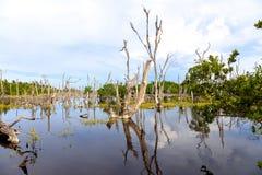 在Cayo Jutias附近的沼泽风景 免版税库存照片