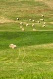 在Cerrina, Monferrato,意大利附近的风景 免版税图库摄影