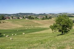 在Cerrina, Monferrato,意大利附近的风景 免版税库存照片