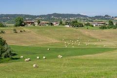 在Cerrina, Monferrato,意大利附近的风景 免版税库存图片