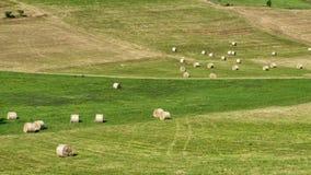 在Cerrina, Monferrato,意大利附近的风景 库存图片