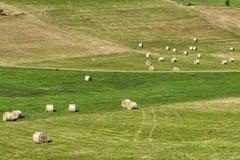 在Cerrina, Monferrato,意大利附近的风景 库存照片