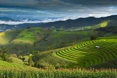 在Chaing Mai的山,泰国 库存图片